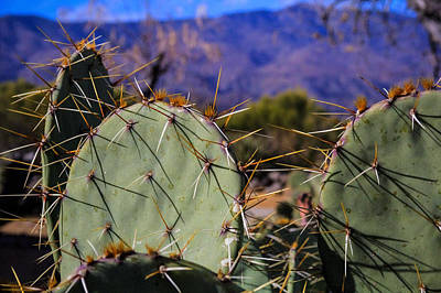 Photograph - Prickly Pear Cactus  by Roger Passman