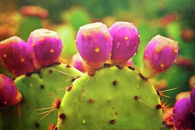 Photograph - Prickly Pear Dreams  by Saija Lehtonen
