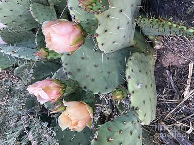 Photograph - Prickly Pear by Erika Chamberlin
