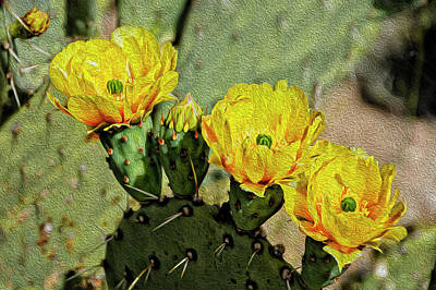 Mark Myhaver Rights Managed Images - Prickly Pear Flowers op42 Royalty-Free Image by Mark Myhaver