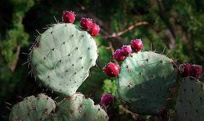 Photograph - Prickly Pear Fruits by Elaine Malott