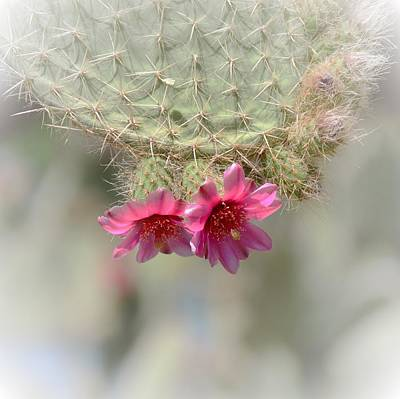 Photograph - Prickly Pear In Pink by Marilyn Smith