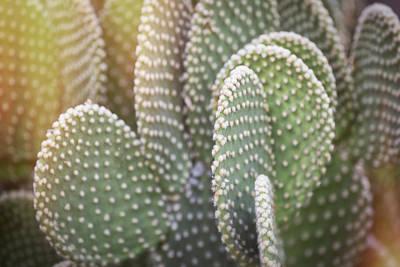 Photograph - Prickly Pear Pad Abstract  by Saija Lehtonen