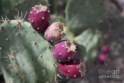 Wall Art - Photograph - Prickly Pear by Tracy Farrand