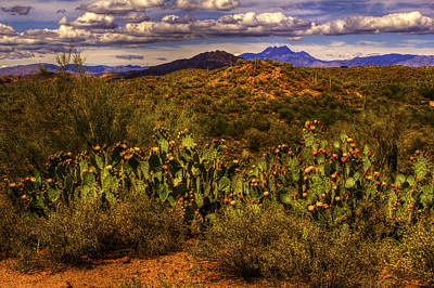 Photograph - Prickly Pears In Bloom by Roger Passman