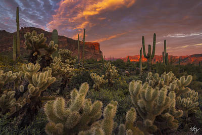 Peter James Nature Photograph - Prickly Pink Peralta by Peter Coskun