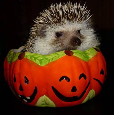 Prickly Pumpkin Art Print