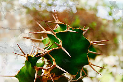Photograph - Prickly by Susan Vineyard