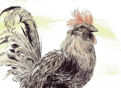 Drawing - Pride Of A Rooster by Alice Chen