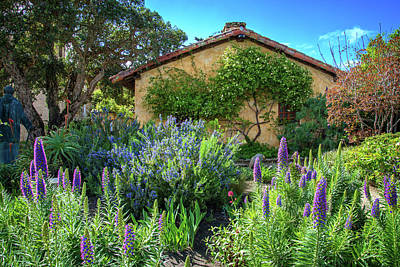 Photograph - Pride Of Madeira In The Mission Garden by Lynn Bauer