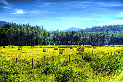 Photograph - Priest Lake Hay by David Patterson