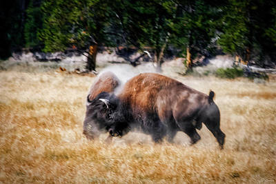 Photograph - Primal by Rick Furmanek
