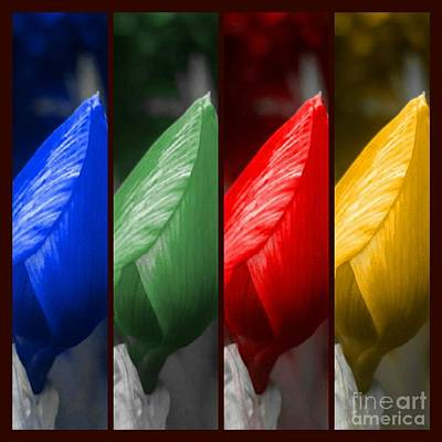 Photograph - Primary Colors  by Rachel Hannah