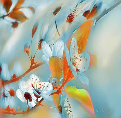 Photograph - Primavera Fria by Alfonso Garcia