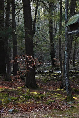 Photograph - Primitive Forest W Birdhouse by Margie Avellino