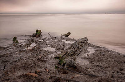 Photograph - Primordial Swamp by Travis Rogers