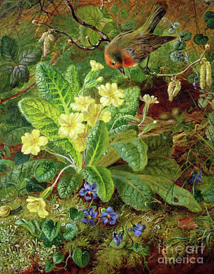 Primroses Painting - Primrose And Robin by William John Wainwright
