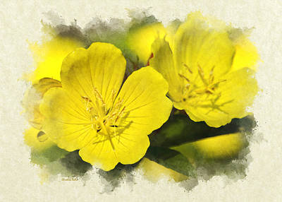 Photograph - Primrose Flowers Blank Note Card by Christina Rollo