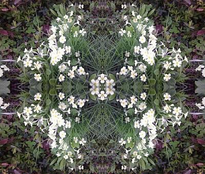 Photograph - Primrose Paradise by Julia Woodman