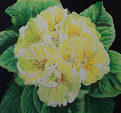 Painting - Primroses by Frank Hamilton