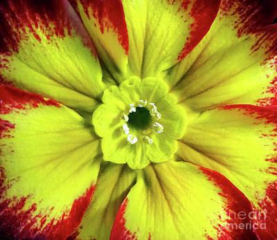 Photograph - Primula Macro by Jasna Dragun