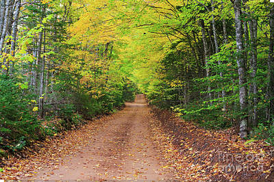Photograph - Prince Edward Island Clay Dirt Road by Verena Matthew