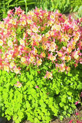 Digital Art - Prince's Island Flowers by Donna L Munro