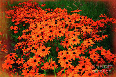 Photograph - Prince's Island Park Brown Eyed Susans Orange Glow by Donna L Munro