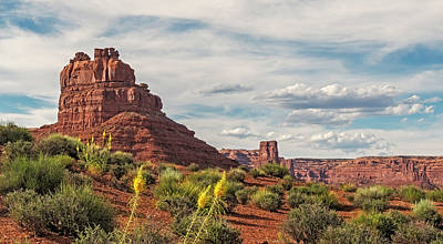 Photograph - Princes Plume In Valley Of The Gods by Loree Johnson