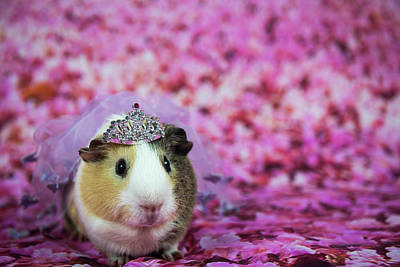 Photograph - Princess Hamster by Tammy Ray
