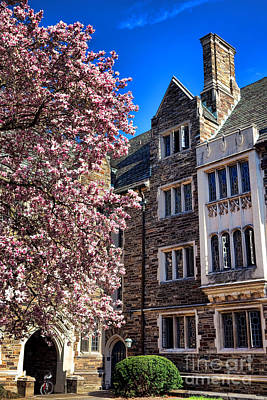 Photograph - Princeton University Pyne Hall Magnolia  by Olivier Le Queinec