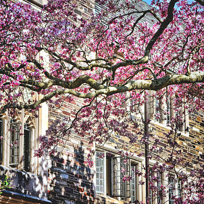 Photograph - Princeton University Springtime Celebration  by Olivier Le Queinec