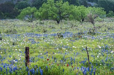 Photograph - Private Property -wildflowers Of Texas. by Usha Peddamatham