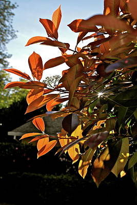 Photograph - Privet In Spring Evening by Michele Myers