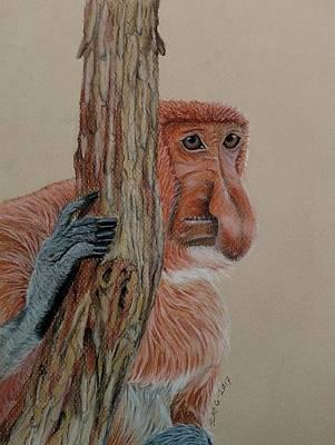 Pastel - Probiscis Monkey by Joan Mansson