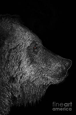 Profile Of A Bear Art Print by Lorraine Logan