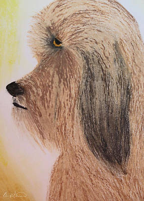 Ewok Photograph - Profile Of An Ewok Dog by Brandy Stinchcomb