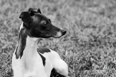 Photograph - Profile Of Ethan In Black And White by Angela Rath