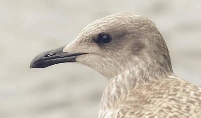 Photograph - Profile Of Juvenile Seagull by Jacek Wojnarowski