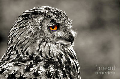 Photograph - Profile Portrait Of A Great Horned Owl IIi by Jim Fitzpatrick
