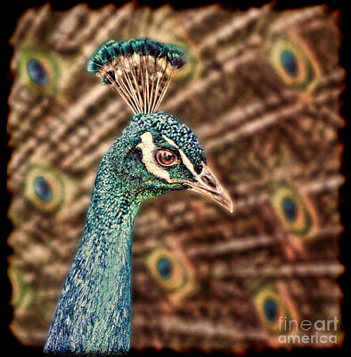 Digital Art - Profile Portrait Of A Peacock II by Jim Fitzpatrick