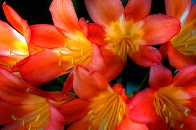 Photograph - Profusion Of Red by Richard Omura
