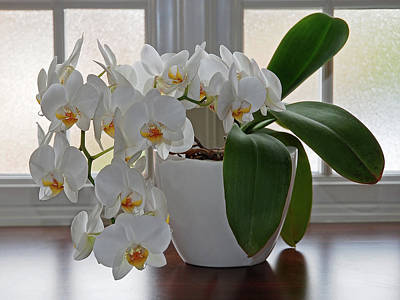 Photograph - Profusion Of White Orchid Flowers by Gill Billington