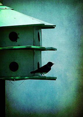 Photograph - Progne Subis Purple Martin by Rebecca Sherman