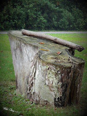 Photograph - Progressive Stump Says . . .  by Wild Thing