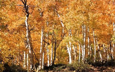 Photograph - Prolific Aspens by Donna Kennedy