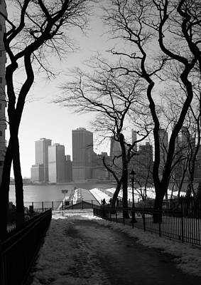 Photograph - Promenade Trees by Christopher Kirby