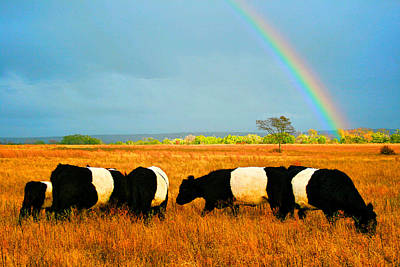 Belted Galloway Photograph - Promise Land by Kori Creswell
