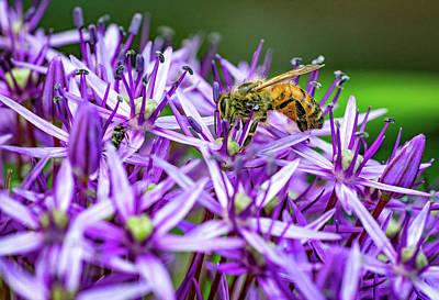 Photograph - Promising Purple 2 by Steve Harrington