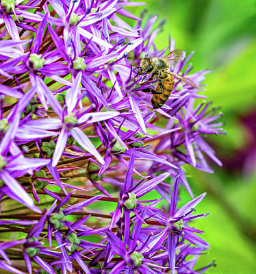 Photograph - Promising Purple 4 by Steve Harrington